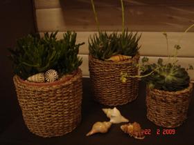 Растения. Увеличить.